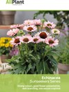 Echinacea Sunseekers Series flyer